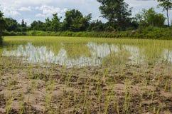 Thailändischer Bauernhof Stockfoto