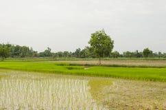 Thailändischer Bauernhof Stockbild