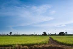 Thailändischer Bauernhof Lizenzfreies Stockbild