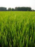 Thailändischer Bauernhof Stockfotos