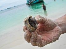 Thailändischer Einsiedlerkrebs in der Hand des Mannes auf dem Hintergrund des Bootes und des azurblauen Ozeans stockfotos