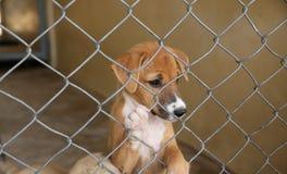 Thailändischer Hund, bei der Käfigaufwartung nehmen zum neuen Haus an Lizenzfreie Stockfotos