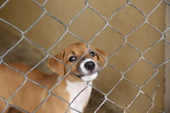 Thailändischer Hund, bei der Käfigaufwartung nehmen zum neuen Haus an Stockfoto