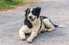 Thailändischer Hundeschwarzweiss-Farbe Lizenzfreies Stockfoto