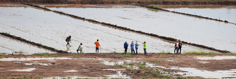 Thailändischer Landwirt, der Land für Saatbeet vorbereitet Reisfeld mit Wasser Muster in der Natur Lizenzfreie Stockfotografie