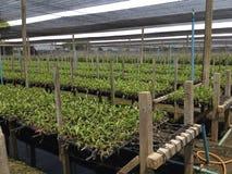 Thailändischer Orchideen-Bauernhof Lizenzfreies Stockfoto