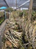 Thailändischer Orchideen-Bauernhof Stockfoto