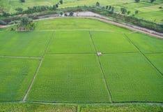 Thailändischer Reis archiviert lizenzfreie stockfotos