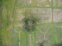 Thailändischer Reis des Luftbildes archiviert stockfotografie