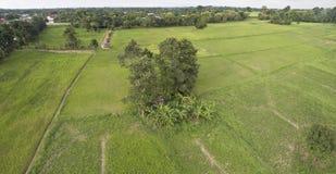 Thailändischer Reis des Luftbildes archiviert stockfotos