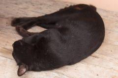 Thailändischer Schlaf der schwarzen Katze Stockfoto