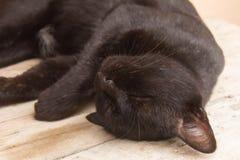 Thailändischer Schlaf der schwarzen Katze Lizenzfreies Stockfoto