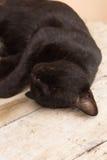 Thailändischer Schlaf der schwarzen Katze Lizenzfreies Stockbild