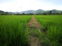 Thailändisches Feld in nakornnayok Bauernhof Lizenzfreie Stockfotos