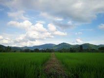 Thailändisches Feld in nakornnayok Bauernhof Stockfotos