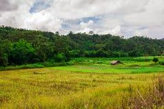 Thailändisches Naturlandschaftsreisfeld mit schönem blauem Himmel und Wolken Lizenzfreies Stockfoto