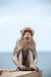 Thailändsk apa och havet Royaltyfria Foton