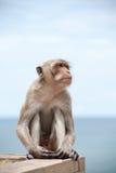 Thailändsk apa och havet Fotografering för Bildbyråer