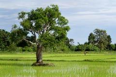 Thailändsk bonde Arkivfoton