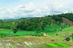 Thailändsk bonde som förlägga i barack i risfält Arkivfoton