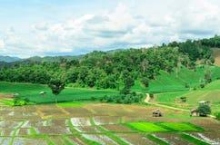 Thailändsk bonde som förlägga i barack i risfält Royaltyfri Fotografi