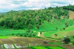 Thailändsk bonde som förlägga i barack i risfält Royaltyfria Bilder