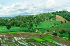Thailändsk bonde som förlägga i barack i risfält Royaltyfri Bild