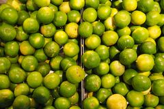 Thailändsk citron royaltyfria bilder
