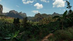 Thailändsk djungel i Khaoen Sok National Park Royaltyfri Fotografi