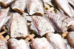 Thailändsk fisksun. Royaltyfria Foton