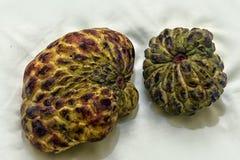 Thailändsk frukt Sugar Apple Fotografering för Bildbyråer