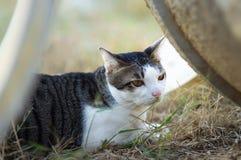 Thailändsk gullig katt i fält Royaltyfria Bilder