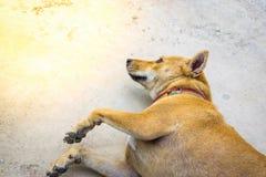 Thailändsk hundkapplöpning på gatan genom att använda tapeten eller bakgrund för att använda bildstillycka med kamratskap royaltyfri bild