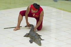 Thailändsk man som retar krokodilen Royaltyfria Bilder