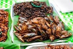 Thailändsk mat på marknaden. Stekt krypgräshoppa arkivbild