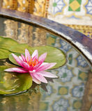 Thailändsk modellreflex på lotusblommavasken Arkivbild