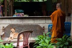 Thailändsk munk och hans hund royaltyfria foton