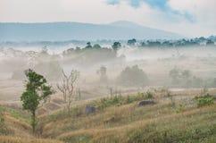 Thailändsk nationalpark Arkivbilder