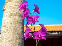 Thailändsk orkidéblomma på det stora trädet 01 Arkivfoto