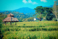 Thailändsk risfält Fotografering för Bildbyråer