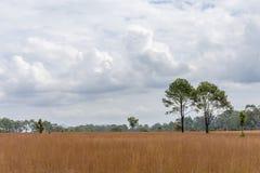 Thailändsk Savannah på den Thung Salaeng Luang nationalparken Royaltyfria Bilder
