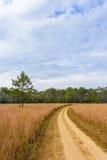 Thailändsk Savannah på den Thung Salaeng Luang nationalparken Fotografering för Bildbyråer