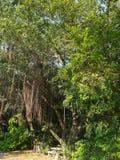 Thailändsk skog i stads- Royaltyfria Foton