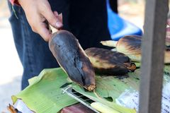Thailändsk-stil av hel grillad havre i hand på bananbladet arkivfoto