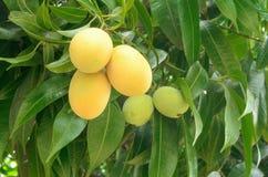 Thailändska frukter Royaltyfri Bild