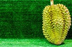 Thailändska frukter: Durian den kontroversiella konungen av tropiska frukter Arkivbild