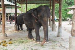 Thailändskt elefanthus Royaltyfri Bild