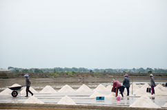 Thailändskt folk som håller som är salt från salt lantbruk Royaltyfria Foton
