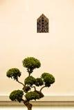 Thailändskt tempelträd med det lilla fönstret Julian Bound Royaltyfria Foton