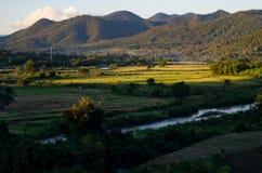 Thailändskt vetefält Royaltyfria Bilder